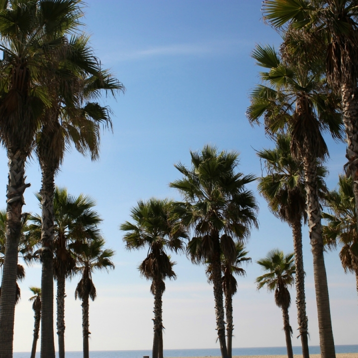 Top 10 Things to Do inLA
